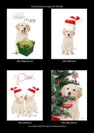 golden retriever christmas card archives kelly richardson