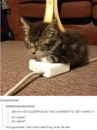 Sleepy Kitty Meme - a cat on a charger animal cat and kitty