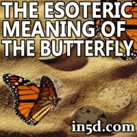 the vatic project the esoteric meaning of the butterfly