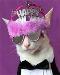 Happy New Year Cat Meme - happy new year 2018 to everyone general discussion empires