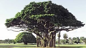 indian tree names in trees of india