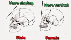 Anatomy Difference Between Male And Female Dental Investigators 2 1 Differences Between Male And Female
