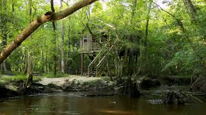 amazing tree house wallpapers life insurance canada arafen