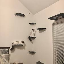 cat wall furniture probrains org