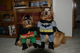 batman costume halloween dog batman and robin costume halloween pet costumes