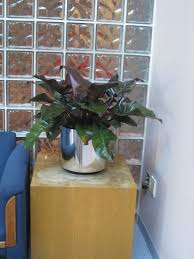plants for office ithaca office plants