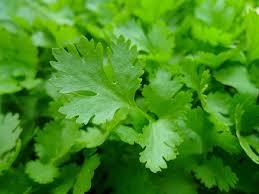 les herbes de cuisine les herbes aromatiques indispensables au jardin pour servir à la