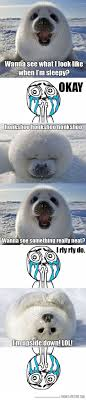 Harp Meme - baby harp seal the meta picture