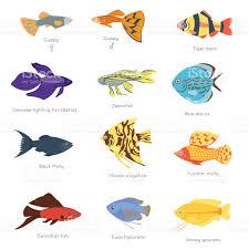 exotic tropical fish different colors underwater ocean species