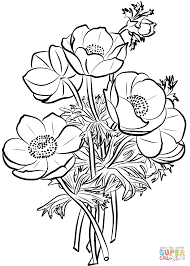 poppies bouquet coloring page free printable coloring pages
