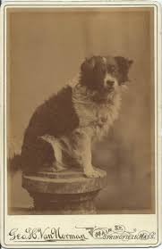 516 best antique dog photos from the bendale collection images on