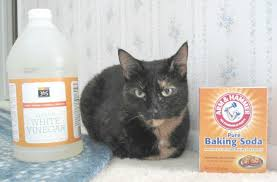 cat friendly cleaning products