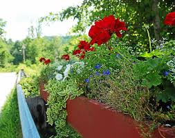 make your own hanging l think inside the box make your own flower boxes hanging baskets
