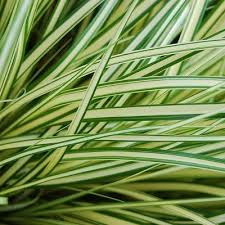 9 best grasses free moving forms images on grasses
