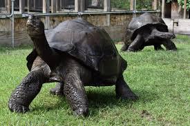 galapagos florida iguana u0026 tortoise breeders