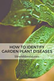 Garden Pests Identification - plant diseases how to identify them in your garden life with