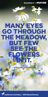 Flower Love Quotes by 139 Best Wildflower Quotes Images On Pinterest Flower Quotes