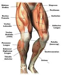 Anatomy Of Body Muscles Pinterest U2022 The World U0027s Catalog Of Ideas