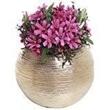Round Flower Vases Amazon Com Gold Vases Home Décor Home U0026 Kitchen