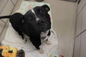 black friday pet adoption best black friday sale ever leaves animal shelter completely empty