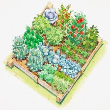 Companion Gardening Layout Plans For Vegetable Gardens