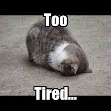 I M So Tired Meme - knit read cats hockey what s the word i m too tired to think of it