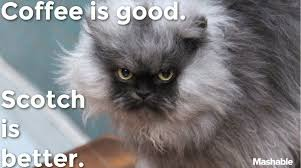 Colonel Meow Memes - colonel meow s 10 tips for conquering mondays