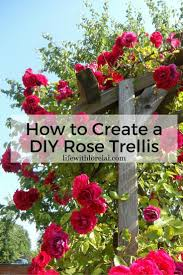 best 25 rose trellis ideas on pinterest plant trellis diy