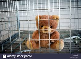 teddy bear in a cage stock photo royalty free image 48022141 alamy