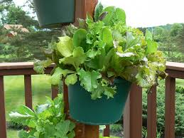Vertical Garden For Balcony - vertical vegetable garden my garden post
