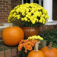 Tips For Curb Appeal - 5 autumn curb appeal tips for attracting the home buyer in october