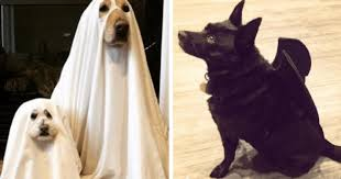 White Dog Halloween Costume 11 Dogs Frighteningly Adorable Scary Halloween