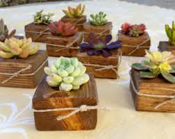 succulent wedding favors beautiful live succulents by 5starsucculents on etsy