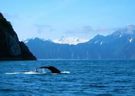 Alaska travel photography images Alaska photography stephanie vermillion jpg