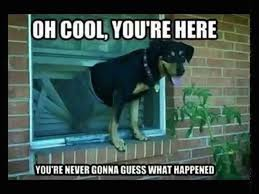 Oh You Dog Meme - 21 memes for anyone whose dogs have ruined their lives someecards