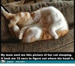 Sleeping Cat Meme - my mom sent me this picture of her cat sleeping it took me 15 secs