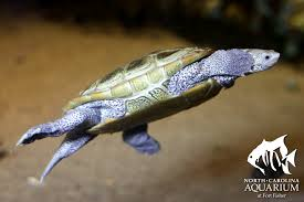 lesson plans sea turtle exploration