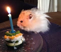 Robin Henry Happy Birthday Henry The Hamster U2013 Robin Gott