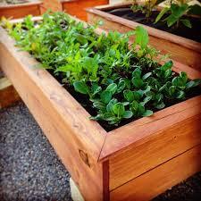 Patio Plants For Sun How To Start A Diy Urban Garden In Miami Florida U2014 Seedsheet