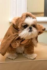 Yorkie Costumes Halloween Walking Teddy Bear Costume Dog Teddy