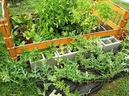 how to plant a quick and easy garden in bags of soil without
