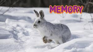 arctic animal memory