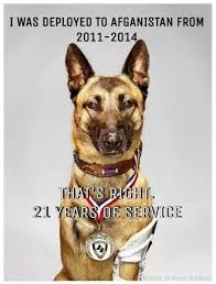 Navy Seal Meme - cairo the navy seal team 6 canine commando home facebook