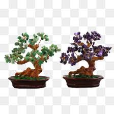 bonsai tree png vectors psd and icons for free pngtree