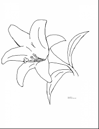 impressive lily coloring pages printable printable flower