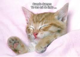 imagenes de gatitos sin frases 78 imágenes bonitas de gatitos tiernos y divertidos para compartir