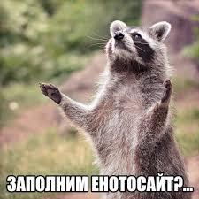 Raccoon Meme - meme creator racoon meme generator at memecreator org