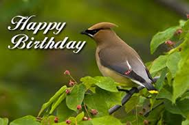 send a nature birthday ecard in honor of someone special bird