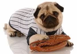 11 athletic costumes so your dog can score some major halloween