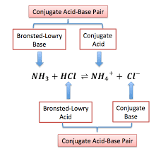 bronsted lowry acid definition u0026 examples video u0026 lesson